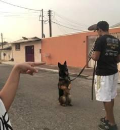 Adestramento Canino - com Certificado