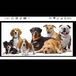 Cuidadora de pets