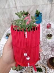 Vendo plantas decoradas,  com terra pronta e etc