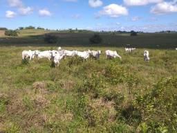 Fazenda 1.300 Tarefas em São Sebastião- BA.