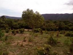Fazenda 50 hectares