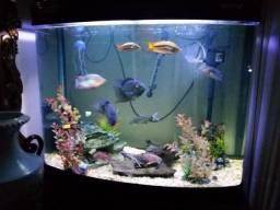 Aquario Boyu 270 litros