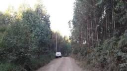 Area para reflorestamento 24 alqueires Cerro azul _PR