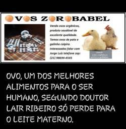Ovos galinhas caipiras e patas