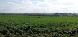 Campo em Bagé