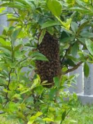 Removo abelhas