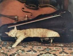 Qual música vc sonha aprender no violino?