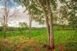 Chácara de 2,8 hectares com rego d´água, local de fácil acesso e muito bonito