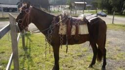 Vendo cavalo mangalarga 3.300