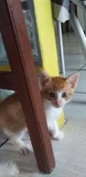 Doa-Se  este lindo gatinho
