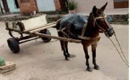 Animal com Carroça(Completo)