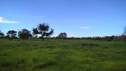 Fazenda 49 alq. agropecuária
