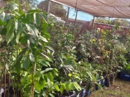 Mudas frutíferas,hortaliças e flores etc