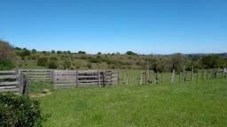 Campo de 15 hectares ideal para pecuária e agricultura!