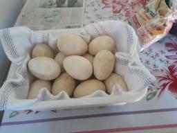 Vendo ovos de gansa