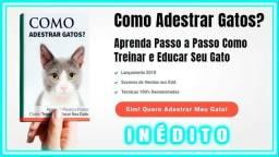 Como Adestrar Gatos? Aprenda Passo a Passo como Treinar e Educar seu Gato
