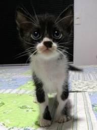 Lindos Gatinhos para doação