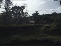 Terreno Campina Grande do Sul, 43.000 m2