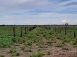 Fazenda em Paraíso do Tocantins - TO