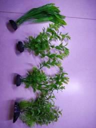 Título do anúncio: Plantas ornamentais para aquários ou aquaterrários