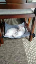 Cama / Redinha para Gatos