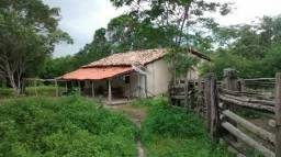 Fazenda de 69 hectares em Caxias/MA