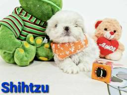 Shihtzu  garanta hoje o seu