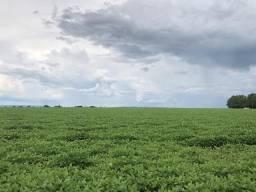 Vendo 82 hectares em Rio verde- Goiás na soja