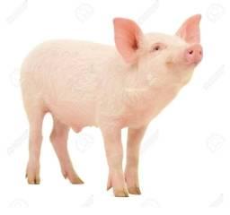 Vende-se porcos abatidos inteiros para as festas de fim de ano!