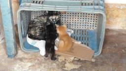 Doa-se um filhotes de gato