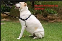Cinto De Segurança Peitoral Para Cães - Tamanho Médio - Novo