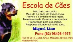 Miguel Lino - Adestramento de Cães com mais de 45 anos de experiência