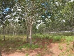 Fazenda 8,0 alqueires - Plantada em Seringueira - Monte Alegre de Minas
