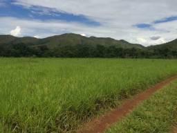 Fazenda 1610 hectares próximo de Araguaína TO