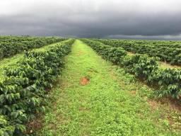 Fazenda com 130ha com 1.200metros de altitude, na regiao de Araxa!!