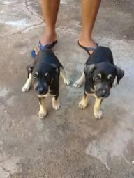 Doacao de cachorros