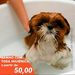 Pet Móvel ( banho e tosa)