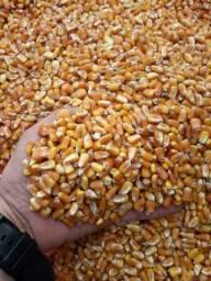 temos milho em grãos saca com 50kg.preco 73.