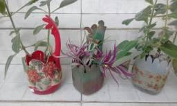 Vasinhos com plantas medicinais