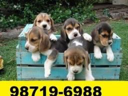Canil Lindos Cães BH Filhotes Beagle Poodle Maltês Lulu Bulldog Pug Shihtzu Yorkshire Fox