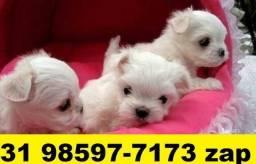 Canil Filhotes Cães Pet BH Maltês Lhasa Lulu Poodle Yorkshire Shihtzu Bulldog Pug
