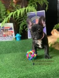 Mini Bulldog Frances Lilac Fawn