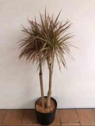 Plantas ornamentais diversas