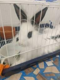 Doando uma coelha pra quem cuidar