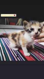 Gatinhos lindos para adoção responsável