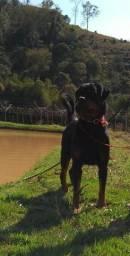 Entrega Grátis 12/12 Teixeira de Freitas-Rottweiler (27)997274395