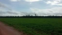 Fazenda em Querência - MT