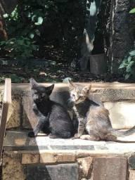 Doda-se filhotes de gato