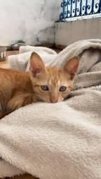 Gato para adoção responsável