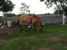 Vendo cavalo muito manso e bom